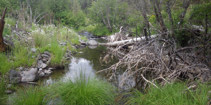 Hydrologic Challenges of Management in Riparian Areas
