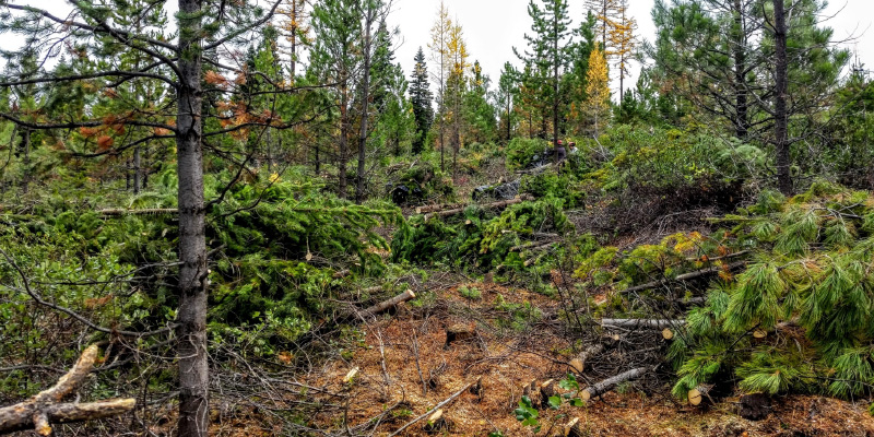 managing slash forest restoration treatments
