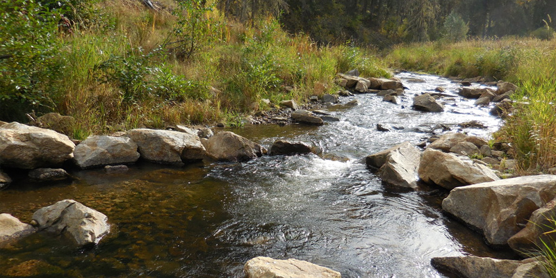 Proactive Riparian Treatments and Clean Water Act Compliance