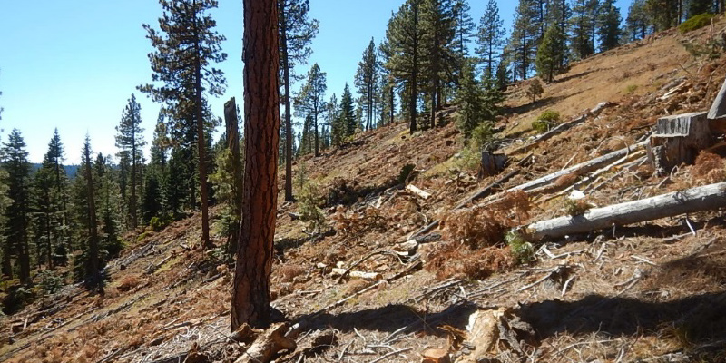 soil resource management steep slope logging
